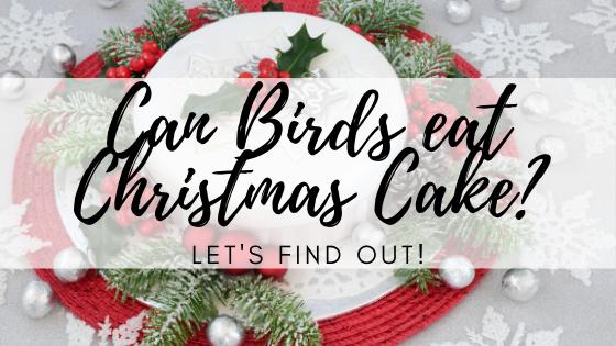 Can Birds eat Christmas Cake_